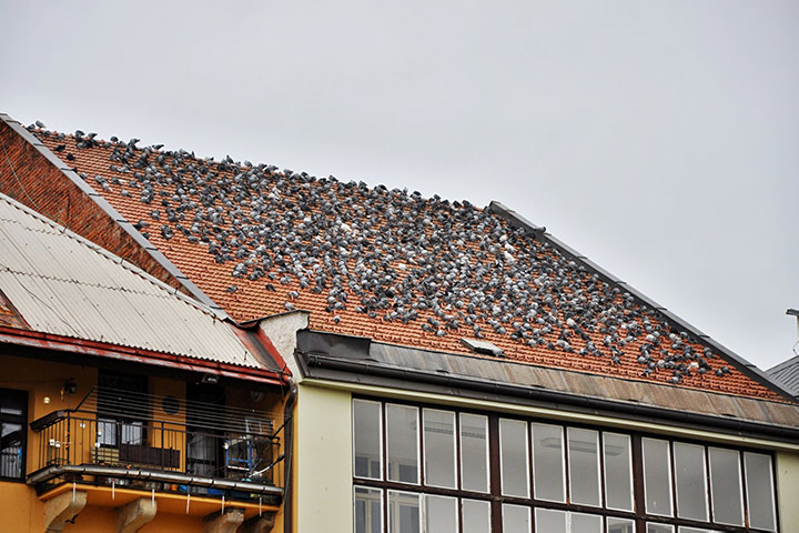 A2B Pest Control are able to install spikes to deter birds from roofs in Greenwich.