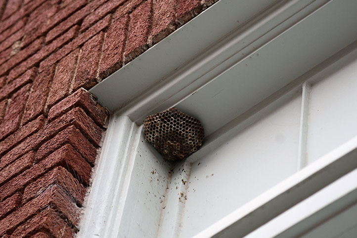 We provide a wasp nest removal service for domestic and commercial properties in Greenwich.